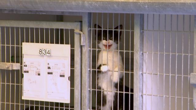 L'adoption des chats suspendue à la SRPA de Cointe