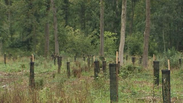 La forêt aussi souffre de la sécheresse