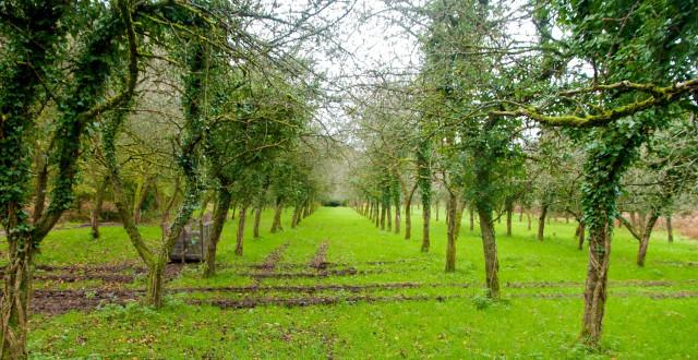 Lancement du projet de plantation #YesWePlant en Wallonie