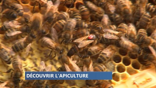 Le Clos des Abeilles ouvre ses ruches ce week-end