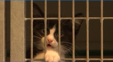 Les chats, préparés à l'adoption à la SRPA