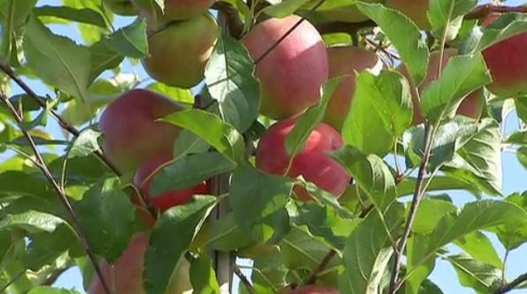 Saveurs de chez nous : Les jus de pommes Biloba