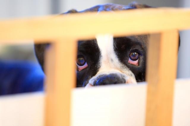 Liège : jusqu'à 10 000 euros d'amendes pour la maltraitance animale