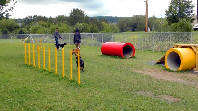 Liège : le parc canin sera installé boulevard Kleyer