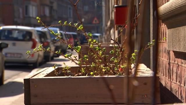 Liège : permis de végétaliser 2.0
