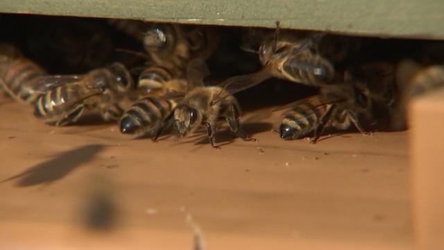 Aywaille : installation de ruches disponibles à la location