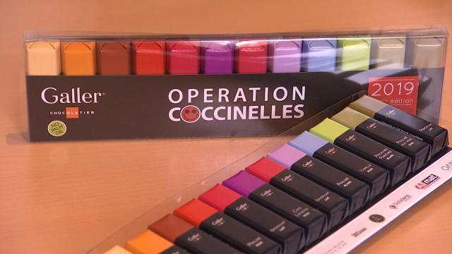 Opération Coccinelles: 180 000 chocolats pour la bonne cause!