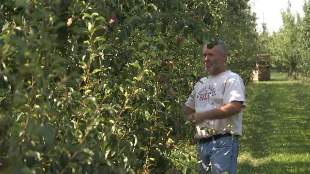Poires : le secteur espère une meilleure récolte qu'en 2018