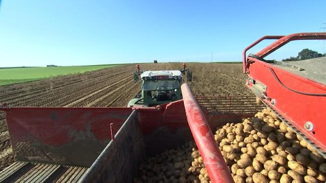 Pommes de terre : la récolte 2017 est bonne, en qualité et quantité
