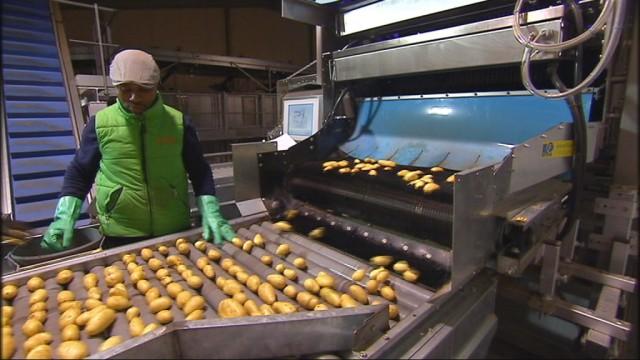 Pommes de terre : la récolte est mauvaise