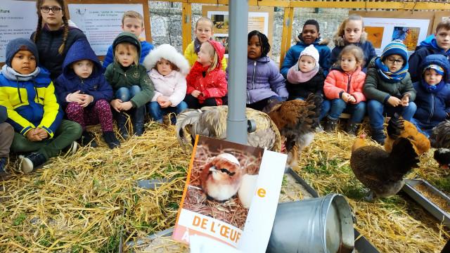 Poulailler pédagogique à l'école Saint Louis de Huy