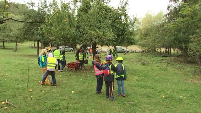 Récolte de pommes pour les élèves de l'école Naniot