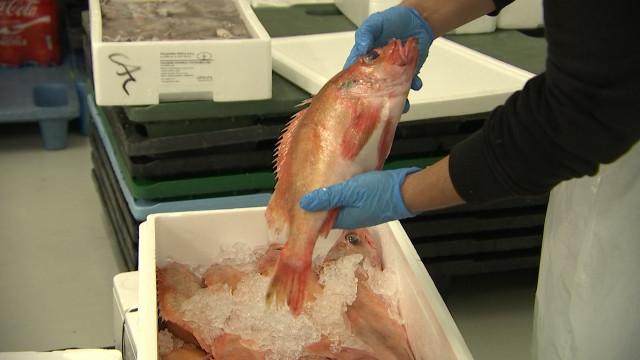 Retour du poisson au marché couvert de Liège