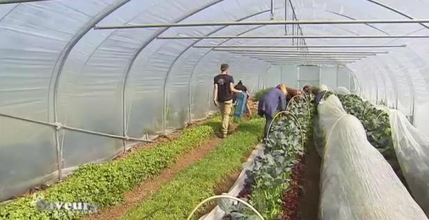 Saveurs de chez nous : les légumes cultivés en agro-écologie