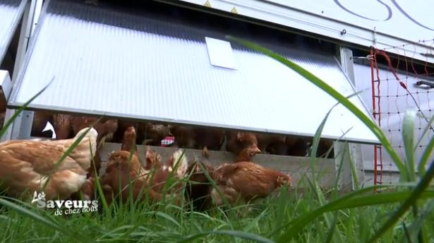"""Saveurs de chez nous : Poulailler mobile de """"Coquettes aux Près"""" à Sprimont"""