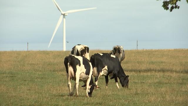 Sécheresse: les prairies ne nourrissent plus le bétail!
