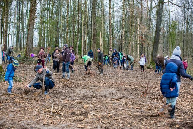 Tinlot : plantation de 3000 arbres