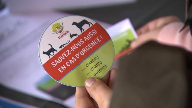 Un autocollant qui peut sauver des animaux domestiques