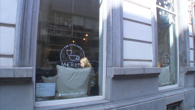Un bar à chat ouvre à Liège