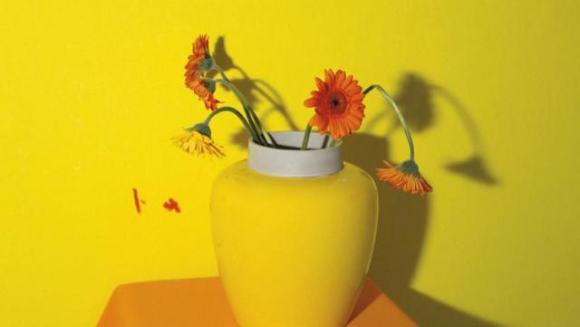 Un livre de photos de fleurs, par Michaël Dans