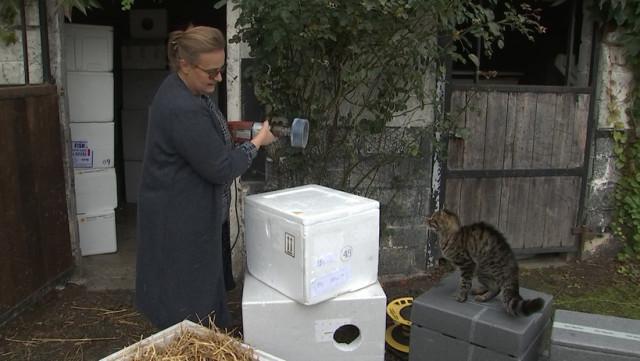 Une ferme à chats à Hermalle-sous-Huy pour Poils et Moustaches