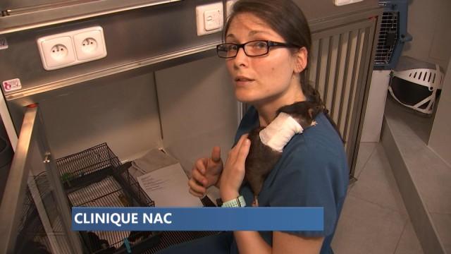 Une nouvelle clinique pour les N.A.C. à Liège !